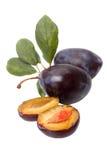 Prunes. Fresh prunes - black plum. Isolated on white background royalty free stock photos