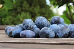 Prunes bleues délicieuses mûres organiques fraîchement sélectionnées sur le vieux fond en bois, foyer sélectif Fond brouillé Photo stock