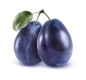 Prunes bleues entières sur le fond blanc Photographie stock libre de droits