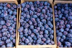 Prunes bleues organiques fraîches sur le marché d'agriculteurs Fruits mûrs de prune dans les boîtes E photographie stock libre de droits