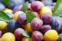 Prunes colorées avec des feuilles photo stock
