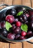 Prunes fraîches Image stock