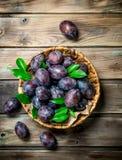 Prunes fraîches avec des feuilles dans un panier images stock