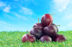 Prunes on grass field Stock Photos