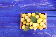 Prunes jaunes fra?ches Fruits m?rs dans une bo?te en bois sur les conseils bleus photo libre de droits