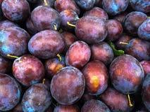 Prunes mûres (prunelliers) au marché d'agriculteurs Photos libres de droits
