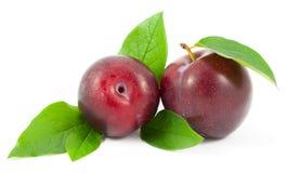 Prunes rouges avec des feuilles Photo stock