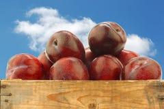 Prunes rouges fraîches dans une caisse en bois photo stock
