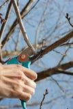 Pruning Stock Photos