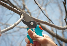 Pruning Stock Photo