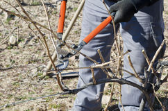 Pruning Stock Image