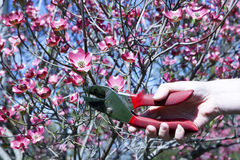 Pruning Stock Images