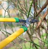 pruning Stock Foto's