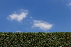 pruning Stock Foto