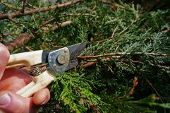 Pruning B Royalty Free Stock Photography