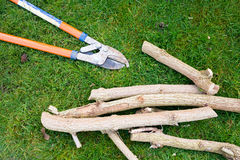 Pruning Branches Stock Photo