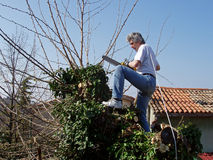 Pruning with chainsaw Royalty Free Stock Photo