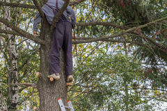 Pruning dead tree branches 2. Pruning dead tree branches with a hand saw Royalty Free Stock Photos