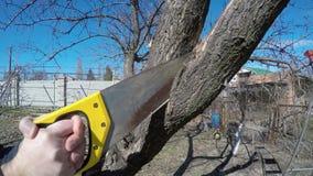 Pruning fruit trees stock footage