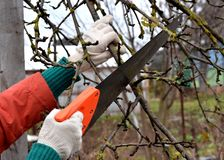 Pruning fruit trees stock photos