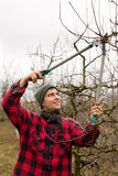 Pruning fruits Royalty Free Stock Photo