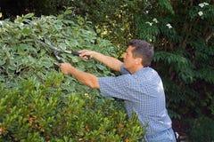 Pruning gardener. Man pruning a hedge Royalty Free Stock Image