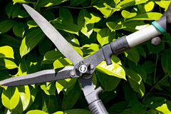 Pruning a Hedge Stock Photo