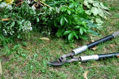 Pruning loppers for gardening Royalty Free Stock Images