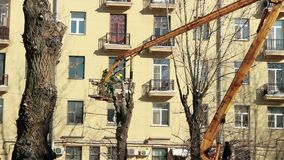 Pruning old high trees in the city. St. Petersburg, Russia, 5 March 2018, gardener cuts off a chainsaw branch old high trees in the city stock video