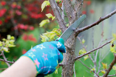 Pruning plants Royalty Free Stock Photo