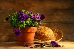 Pruning purple pansies stock image