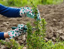 Pruning Royalty Free Stock Images