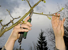 Pruning shear Stock Photography