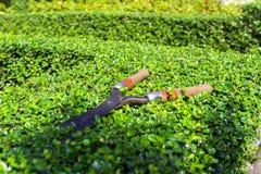 Pruning Shear. Stock Image