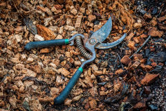 Pruning shears on coconut coir fiber Stock Photo