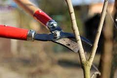 Pruning shears in the garden Royalty Free Stock Photos