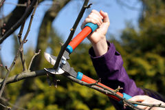 Pruning shears in the garden in early spring Royalty Free Stock Photos