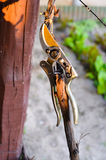 Pruning Shears. Gardening tool, pruining shears used in orchards , wines and gardens Stock Images