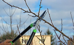 Pruning shears in hand Royalty Free Stock Image