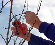 Pruning shears in hand Stock Photo