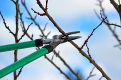 Pruning shears in hand Royalty Free Stock Photo