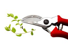 Pruning shears pruning plant Stock Image