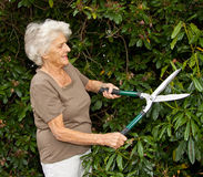 Pruning The Shrubbery Stock Photo