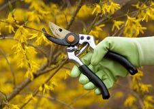 Pruning shrubs Royalty Free Stock Photos