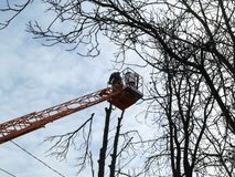 Pruning of tall trees from an aerial work platform in the autumn-spring-winter time. Two workers on bucket truck among the bare. Branches against the blue sky stock photo