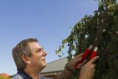 Pruning Tree Stock Image
