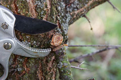 Free Pruning Tree Stock Image - 27112111