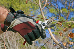 Pruning a Tree Branch Stock Images