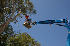 Pruning tree branches. KINGAROY, AUSTRALIA, MARCH 30, 2016: An unidentified man prunes a tall acacia tree from a cherry picker Stock Photo
