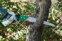 Pruning tree. Pruning fruit trees garden with a hacksaw Stock Photography